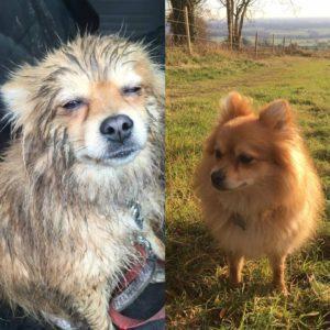 Muddy dog sitting in car and Dog in a field