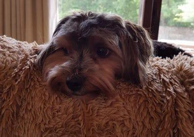 Kates-k9-companions-dog-sitting-pet-sitting-house-sitting-chichester-dog-sitting-on-sofa