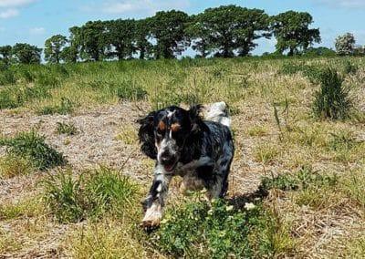 Kate K9 Companions - multicolour dog on a walk